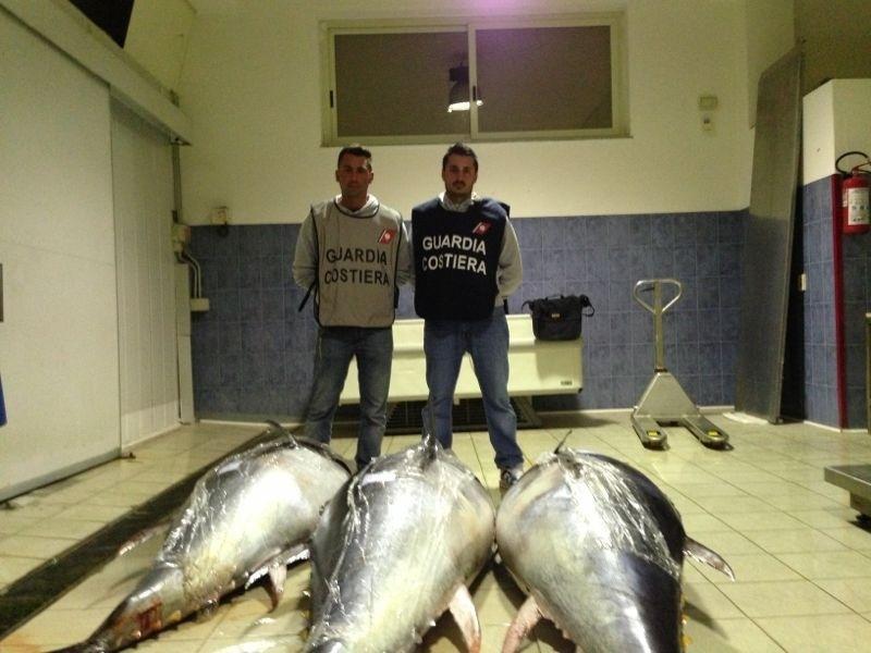 Sequestrati tre esemplari di tonno rosso dal peso, di circa seicento kg